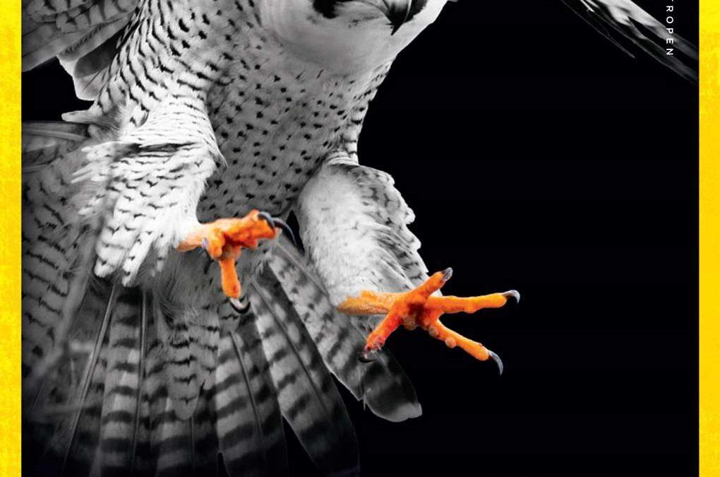 In den Klauen des Falken